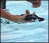 Un movil en el agua