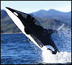 El submarino con forma de orca
